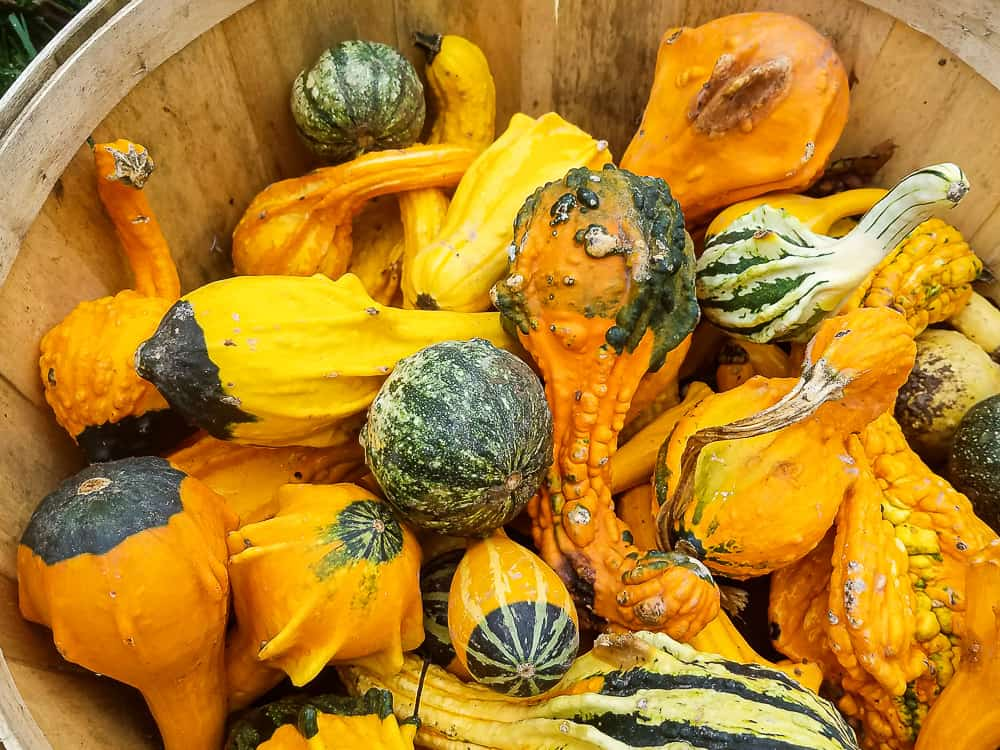 basket full of decorative squash and pumpkins